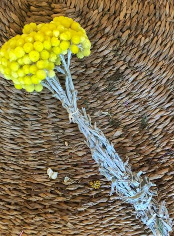 immortelle natural yellow
