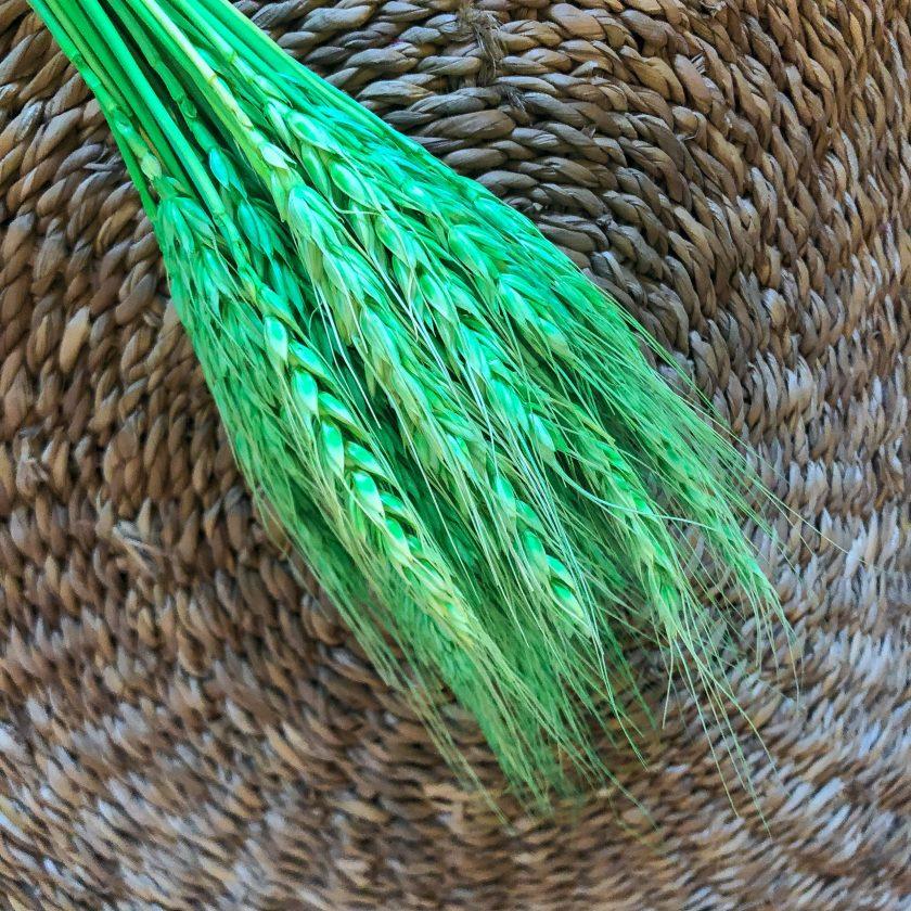 Ear of wheat grønn
