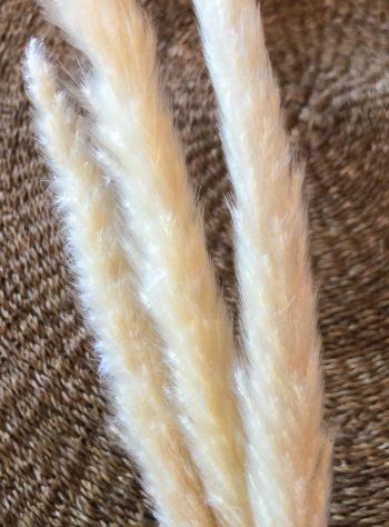 Reed hvit