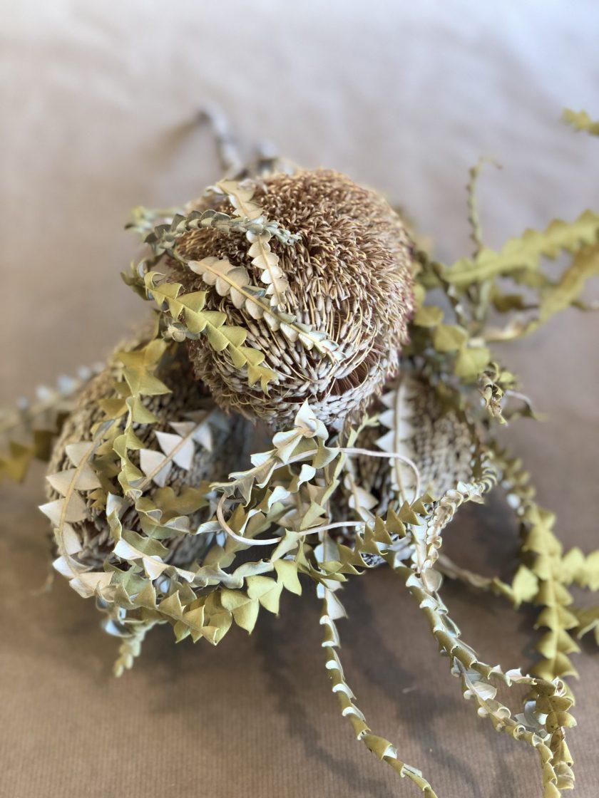 Banksia Hookeriana Flower Natural
